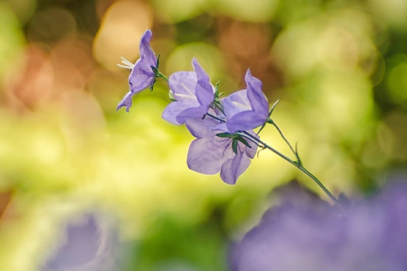 Here Are The Most Gorgeous Bell Shaped Flowers For Your Garden!